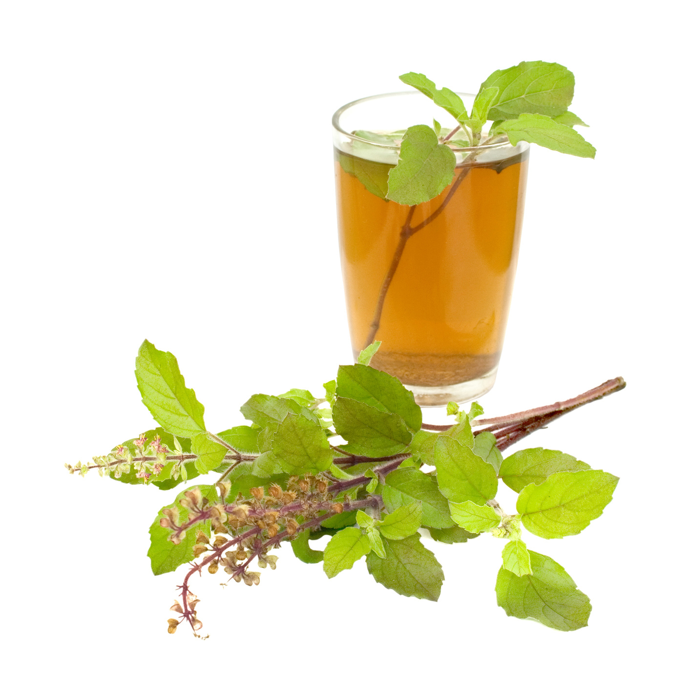 6 Amazing Health Benefits Of Tulsi Plant